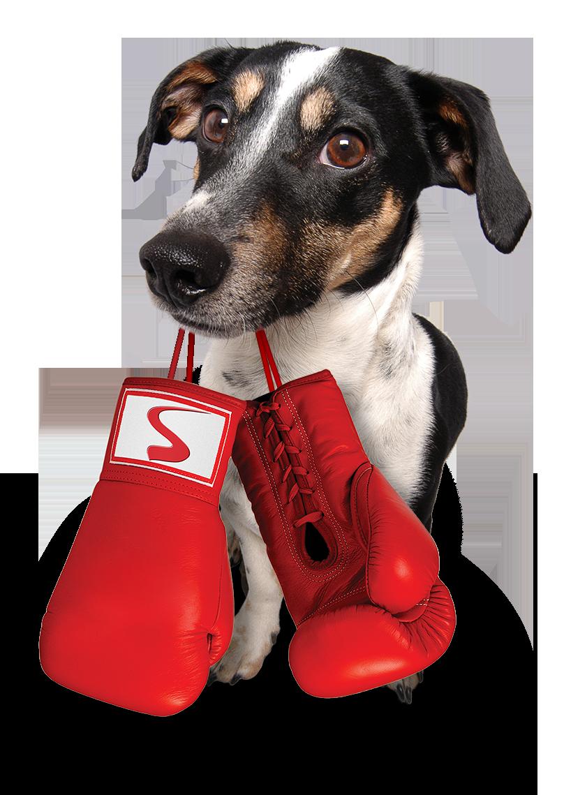 Krasty boxer