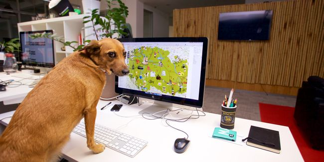Petfriendly office